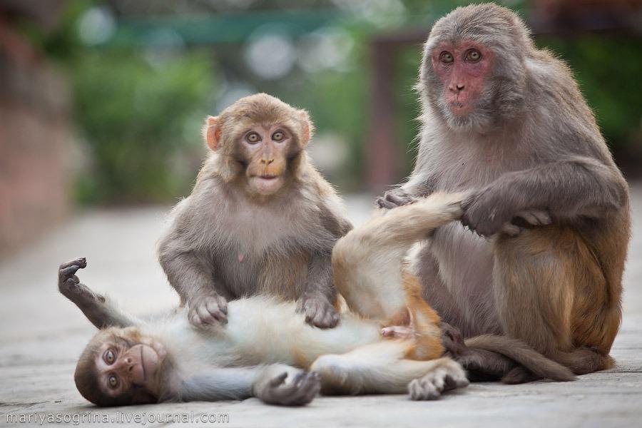 Особенности поведения животных