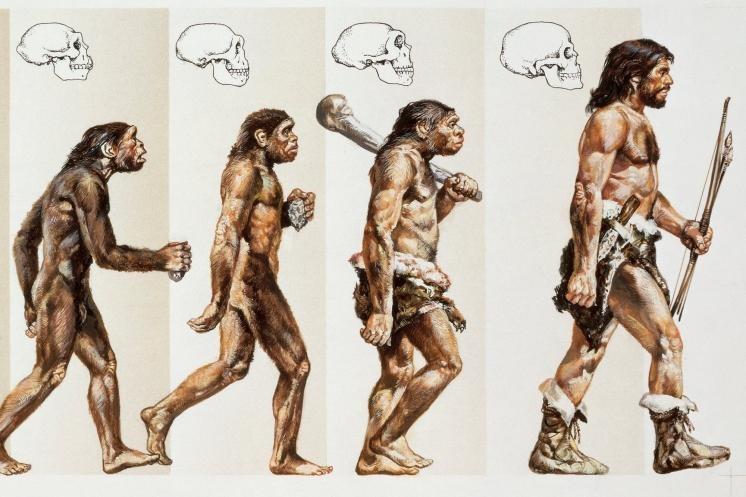 Развитие эволюционизма