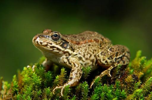 Земноводные. Класс земноводные на примере лягушки.