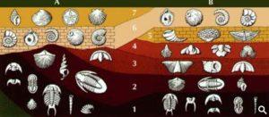 Основы геохронологии
