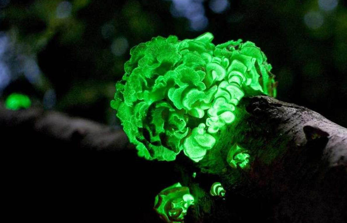 Светящиеся организмы