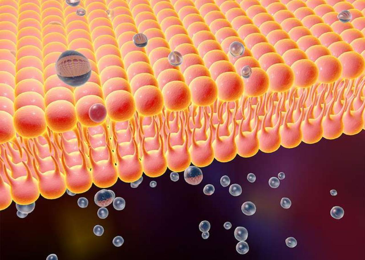 Особенности клеточной мембраны