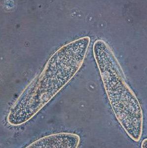 Простейшие водоросли и организмы