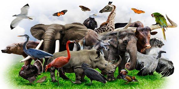 Развитие зоологии