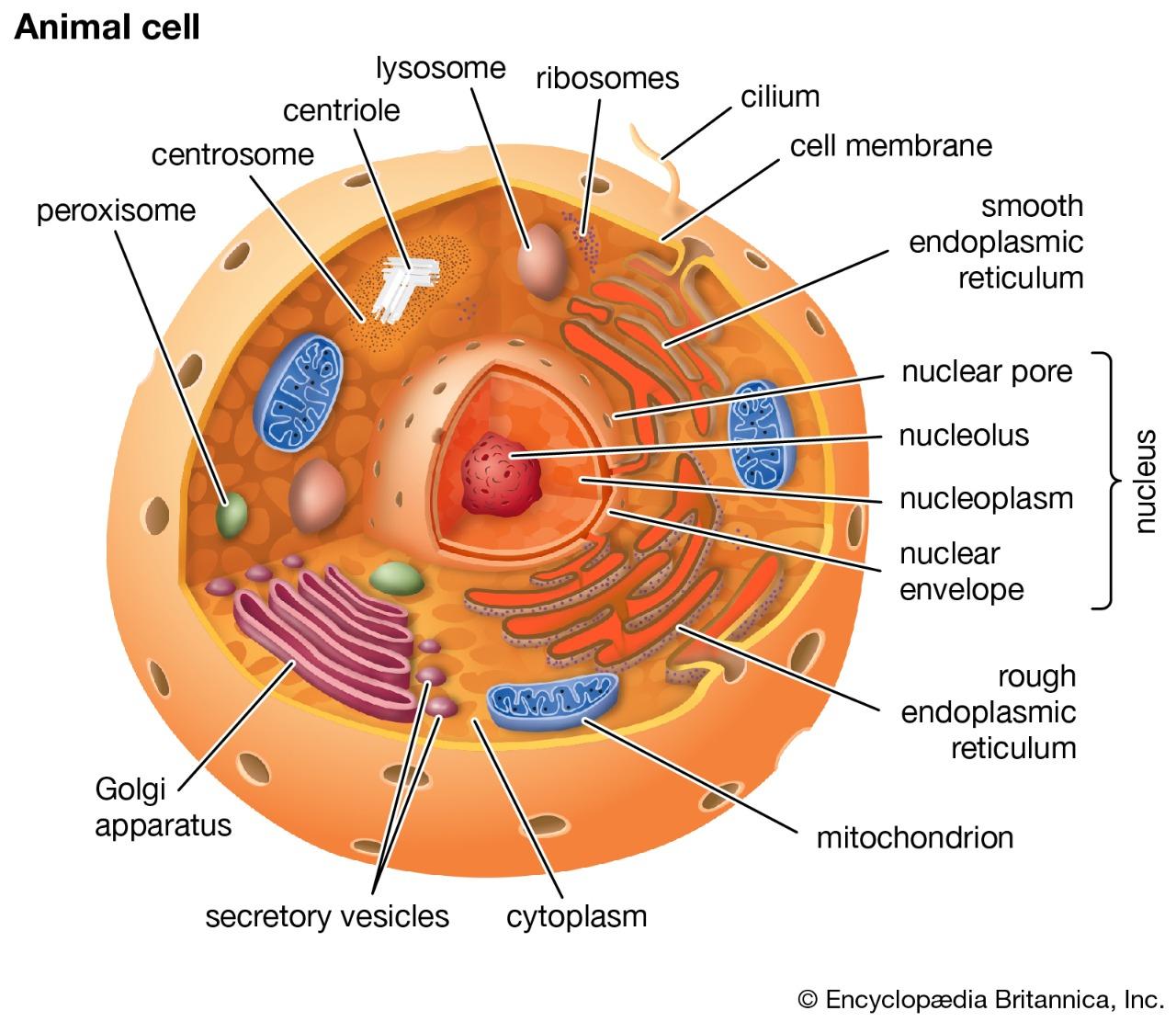 Процессы эукариотов